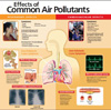 Effects of Common Air Pollutants Medical Poster small